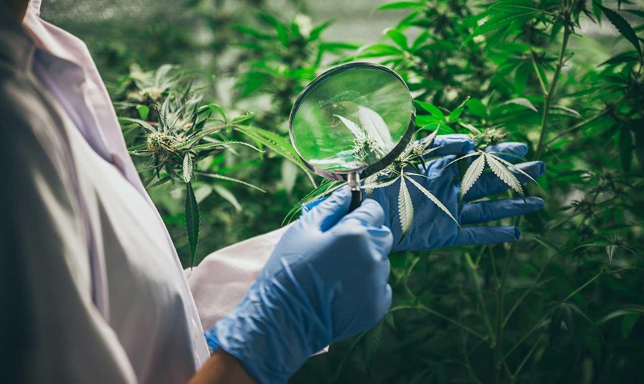 webinar cannabis medicinal farmaforum devecan