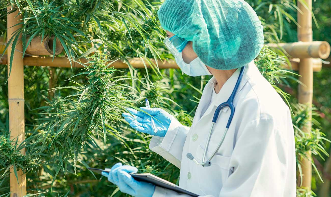 acceso al cannabis medicinal seguro devecan