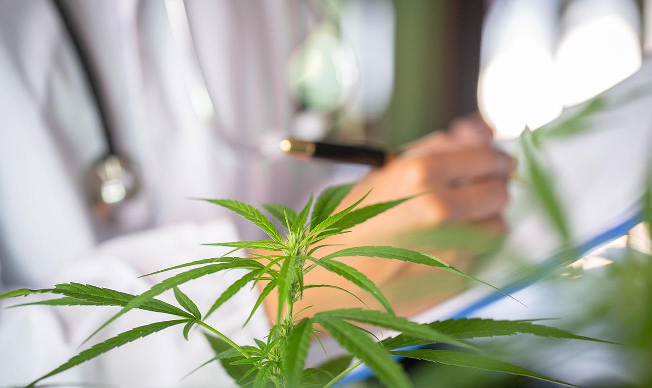 japón legislación para uso cannabis medicinal